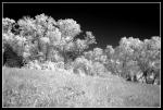 Fotografia infrarossa, 12